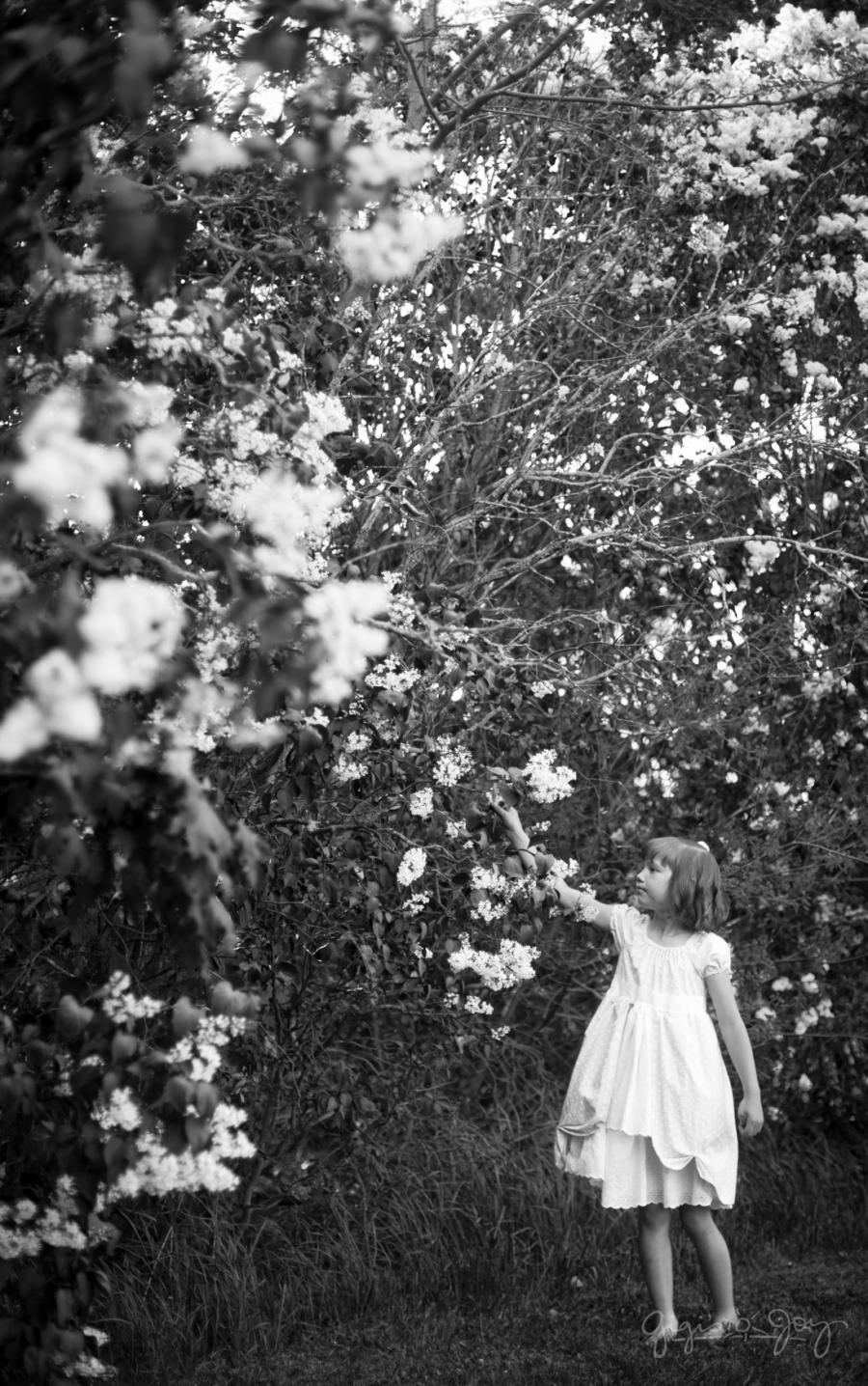 Gigi's Joy: Lilacs