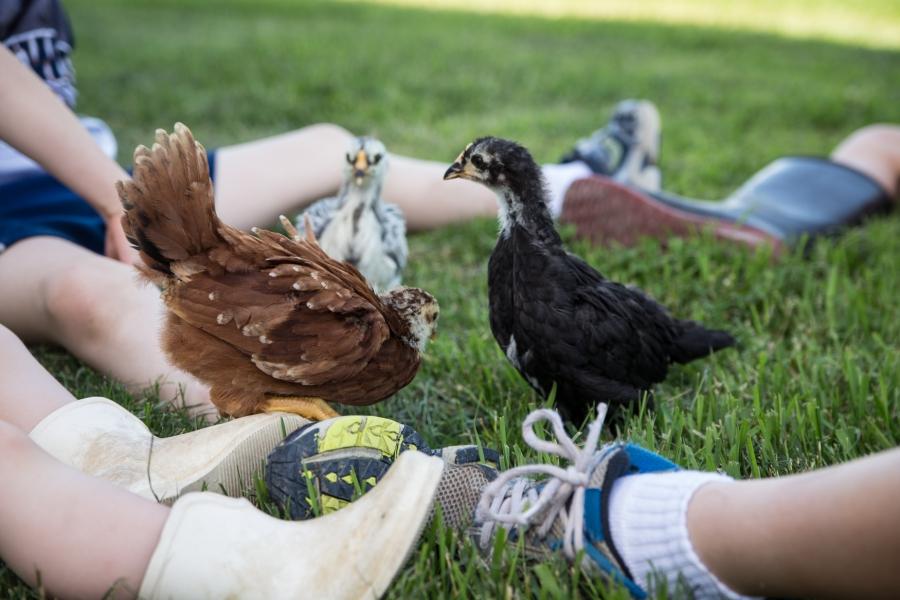Gigi's Joy: Hens