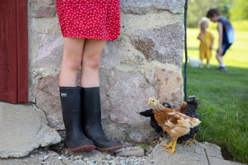 Gigi's Joy: boots and chickens