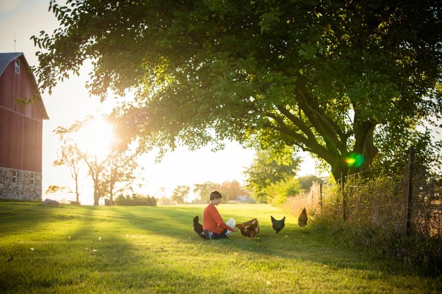 Gigi's Joy Photography: Feeding Chickens