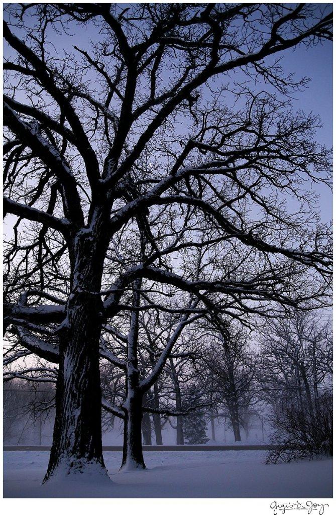 Gigi's Joy Photography: Winter Landscape Union Grove